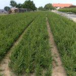 Forstgarten Vom Samenkorn zur Jungpflanze / Bildquelle Verein BFZ Bäuerliche Forstpflanzenzüchter